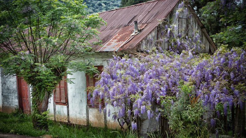 Inscrições abertas para o Concurso Fotográfico do Festival da Primavera em Nova Petrópolis, RS